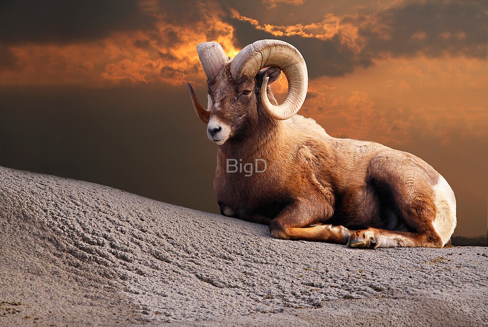 King Of The Mountain by BigD