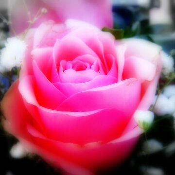 """""""PRETTY IN PINK"""" by Eugenio"""
