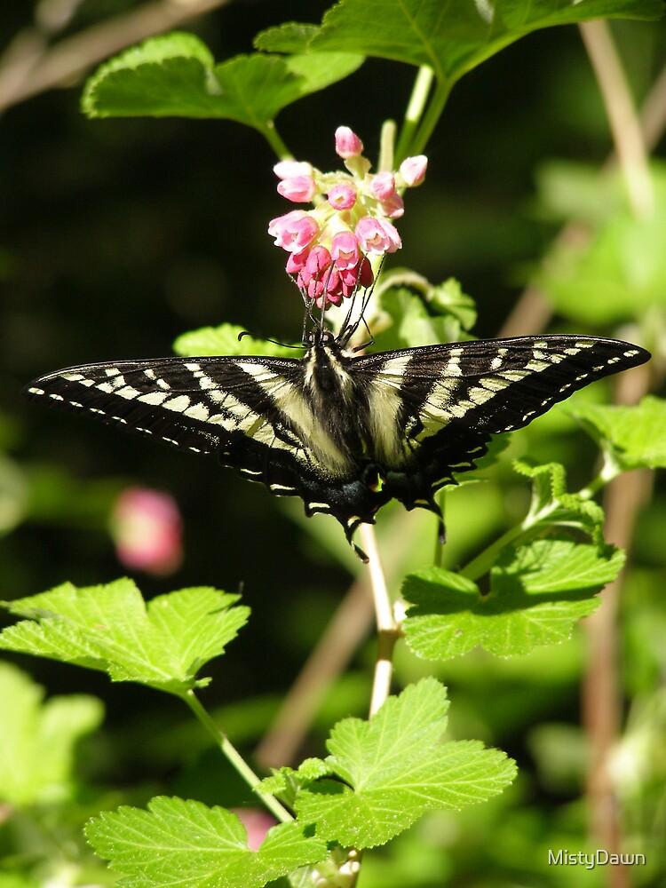 Butterfly by MistyDawn