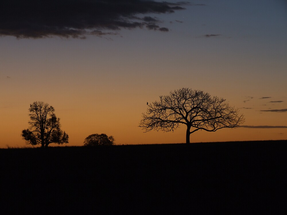 Silouette of Death at Sunset by wombat23