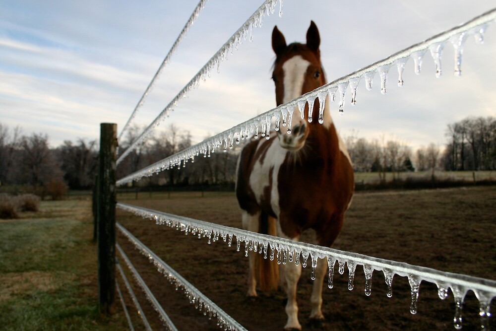 Equine Ice by Blackrock