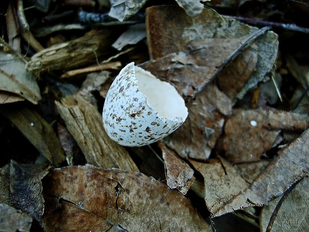 Eggshell in Browns by Artlife