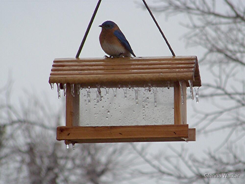 A Bluebird in Winter by Glenna Walker
