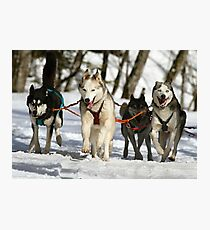 Dogs in action Photographic Print