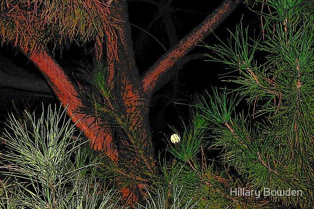 Peek-a-boo Moon by Hillary Bowden