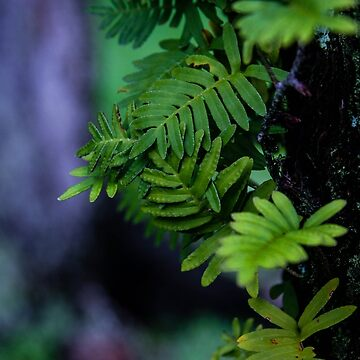 Fern Entanglement by the-chillness