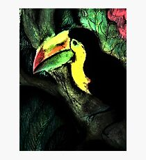PASTEL BRIGHTS TOUCAN TROPICAL Photographic Print