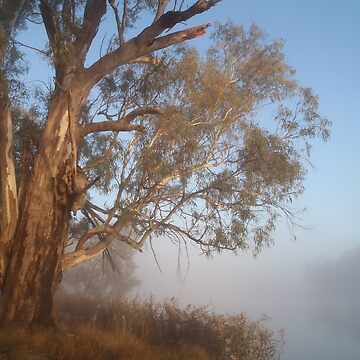 River Red Gum in fog by HaniaAnia
