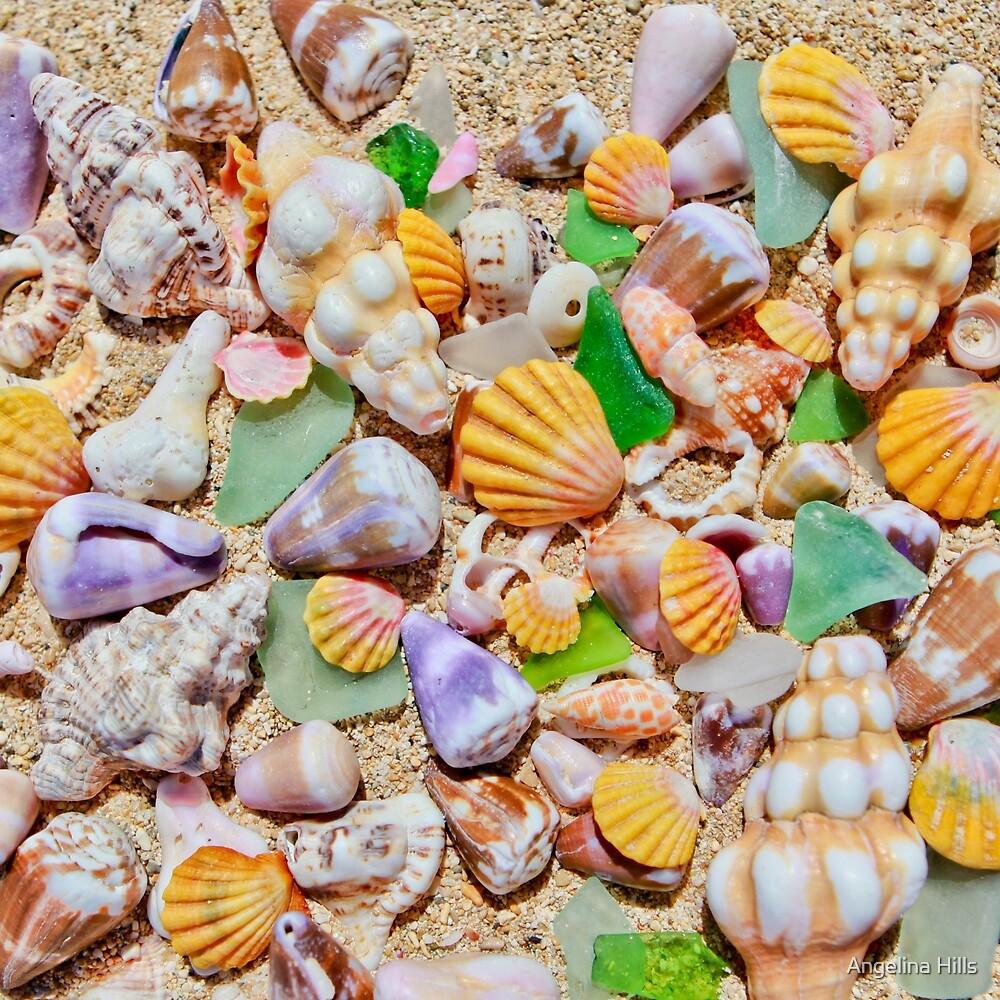 Shells and Starfish  by Angelina Hills