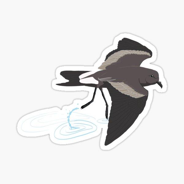 Leach's Storm-Petrel Sticker