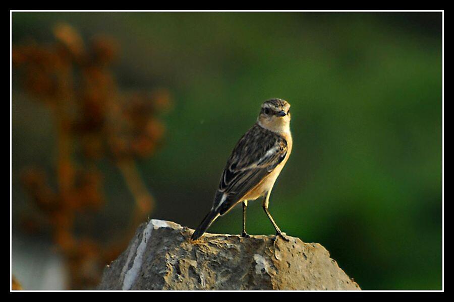 Bird... by Shobingeorge