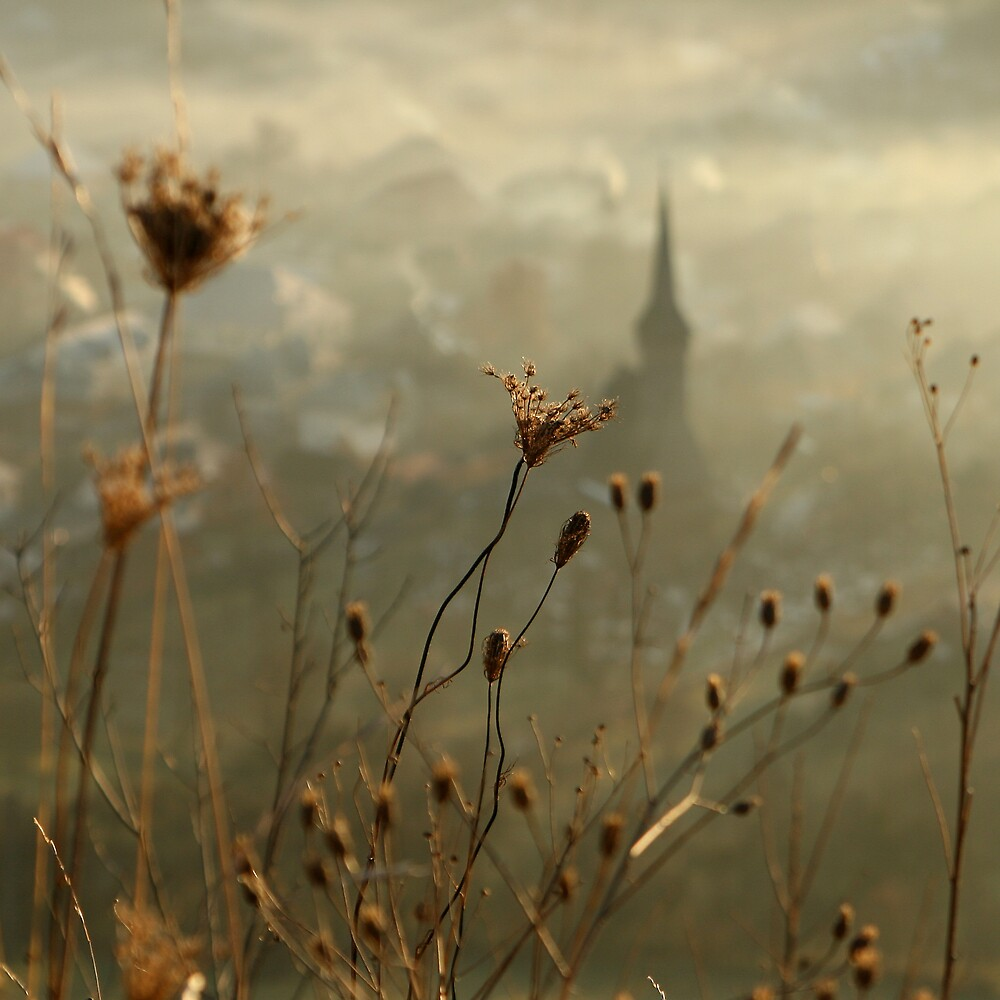 details of a misty morning... by StefaniaC