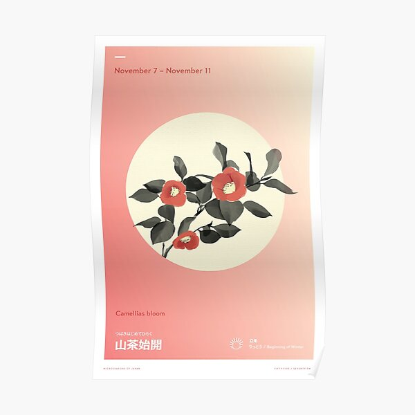 Camellias Bloom Poster