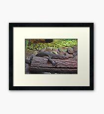 Reptile. Framed Print