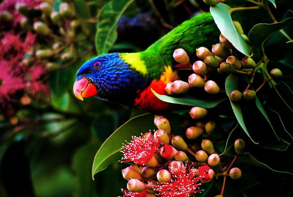Rainbow Lorikeet by Natalie Manuel