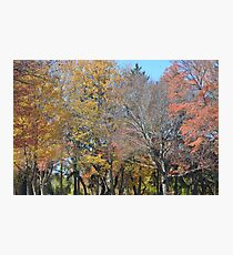Fall Day Photographic Print