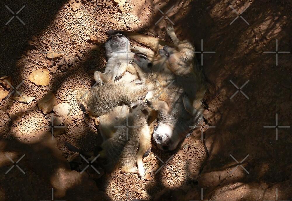 Meerkat Family by Sandra Chung