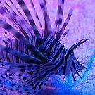 Striped Fish by alibjones