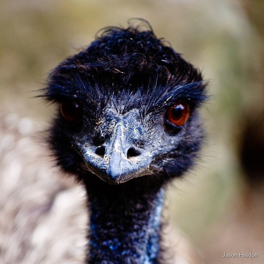 Emu by Jason Hilsdon