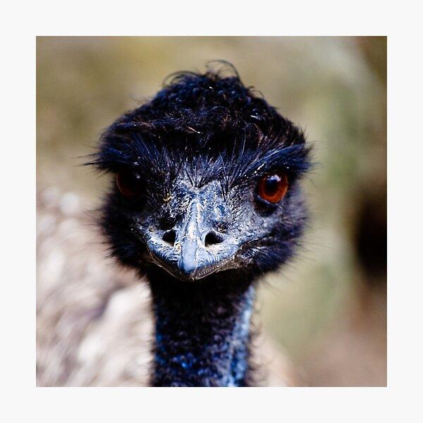 Emu Photographic Print