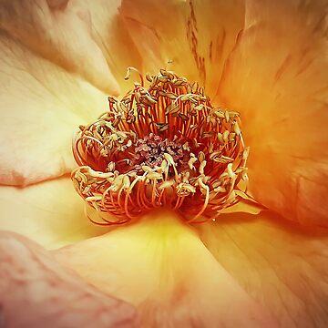 rose by psychoshadow