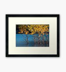 Abraham Lake - little aspens Framed Print