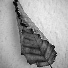 Frozen Leaf. by Dave Hare