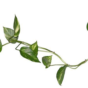 PLANT by ghjura
