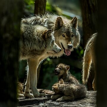 Timber Wolf Family by WolvesOnly