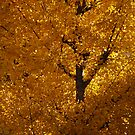 Yellow Leaves, Japan by sideways