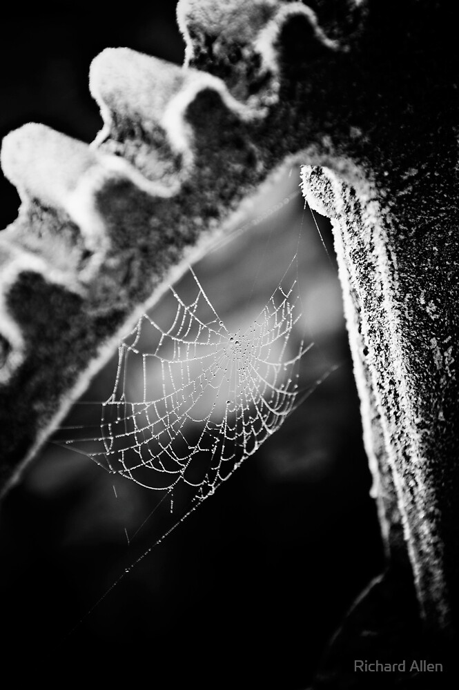 Frosty Cobweb by Lea Valley Photographic