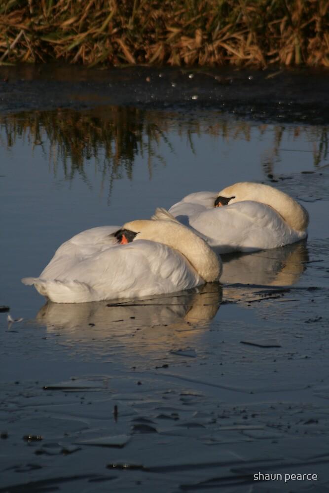 sleeping swans by shaun pearce