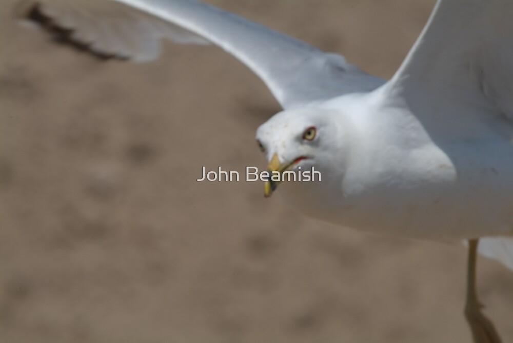 The ol evil eye. by John Beamish