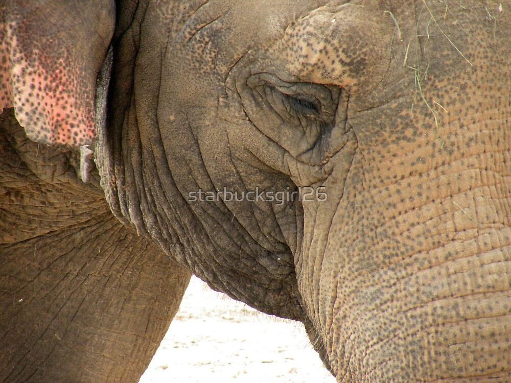 Asian Elephant by starbucksgirl26