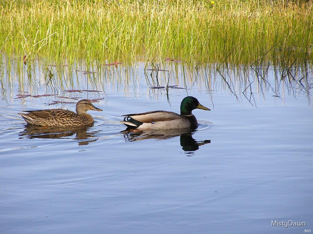Mallard Ducks by MistyDawn