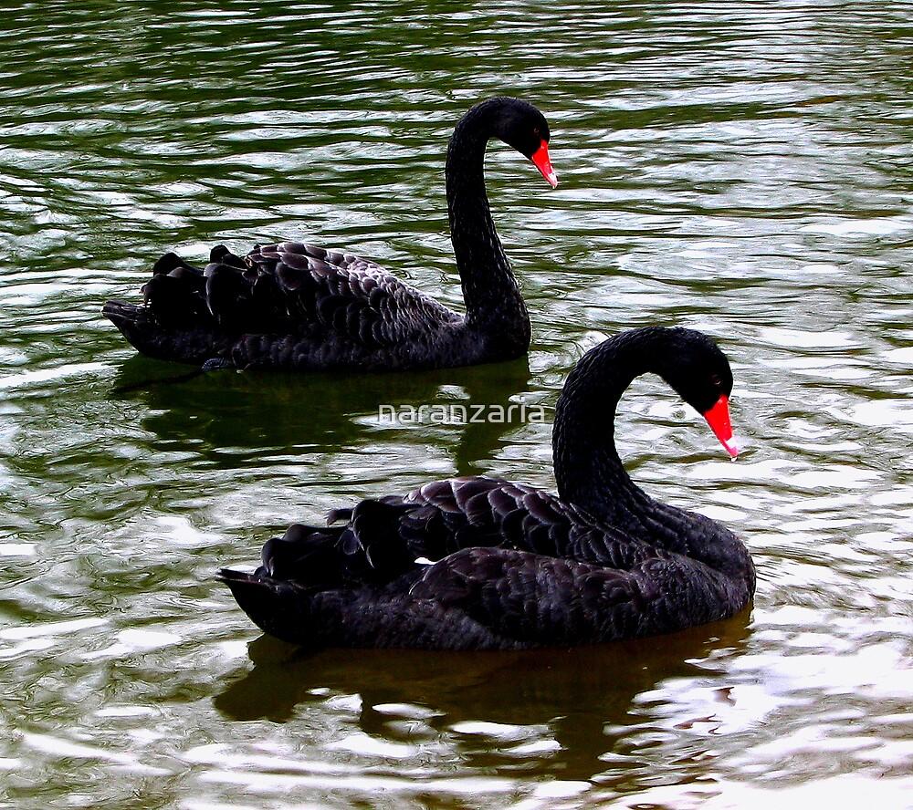 Black Swans by naranzaria