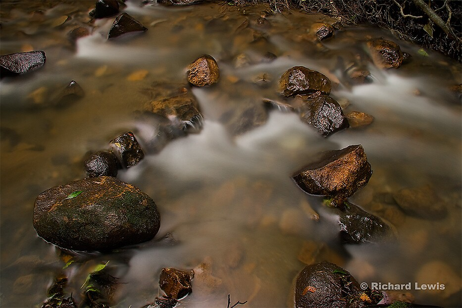 Small Stream, Monteverde, Costa Rica by Richard Lewis