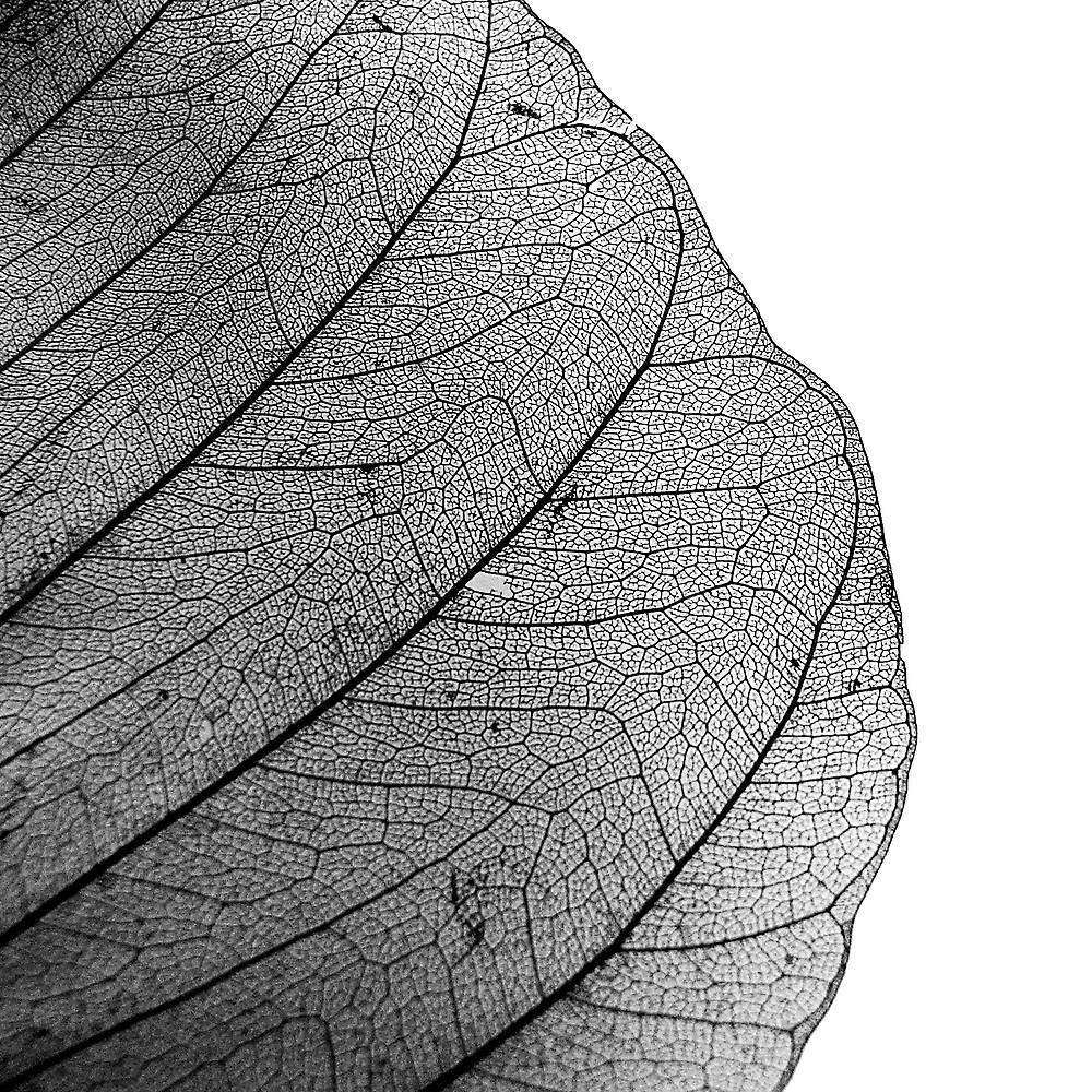 Skeleton leaf by onlyalice