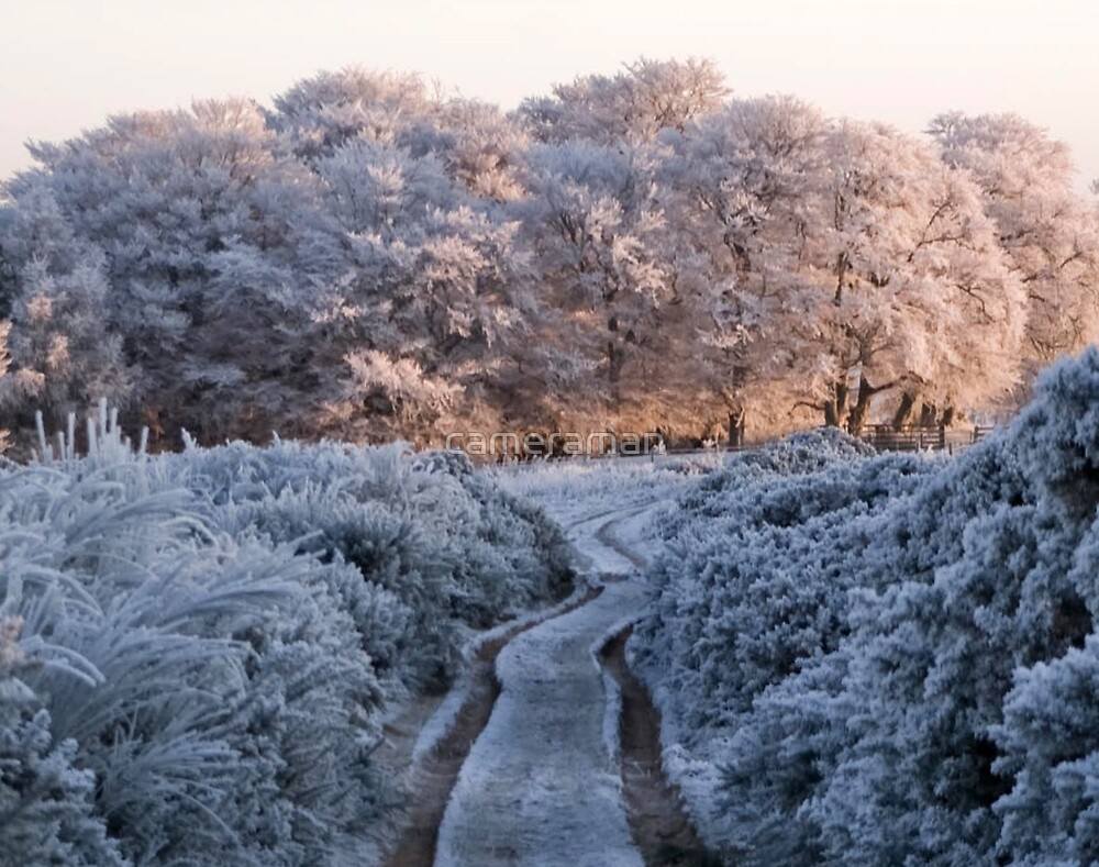 frost by cameraman