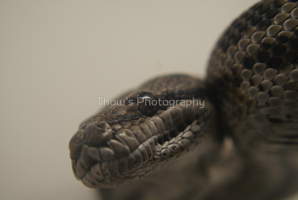 What are you looking at by Thow's Photography