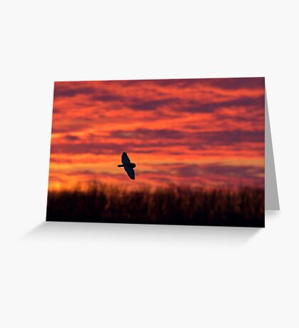 Short-eared owl hunting at sunset Greeting Card