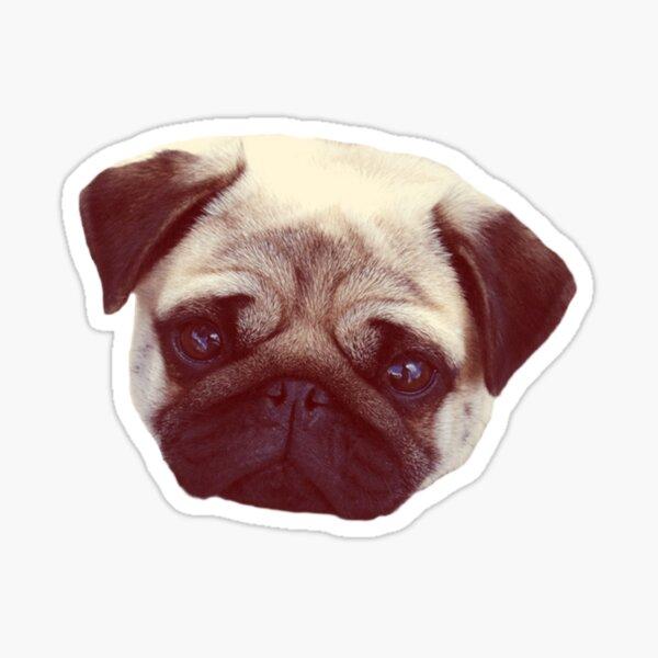 Little Pug Sticker