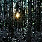 Setting Sun In The Woods by Debbie Oppermann