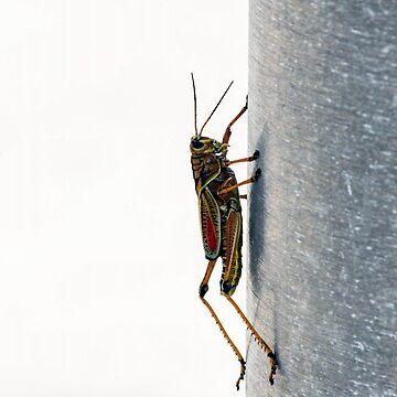 Grasshopper Vertical by the-chillness