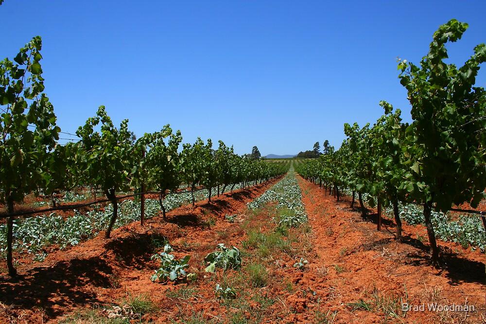 Mistletoe Wines by Brad Woodman