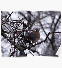 Cold Little Bluebird Poster