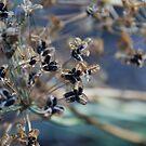Seeds by Catherine Davis