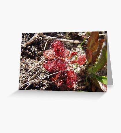 Round leaf Sundew Greeting Card