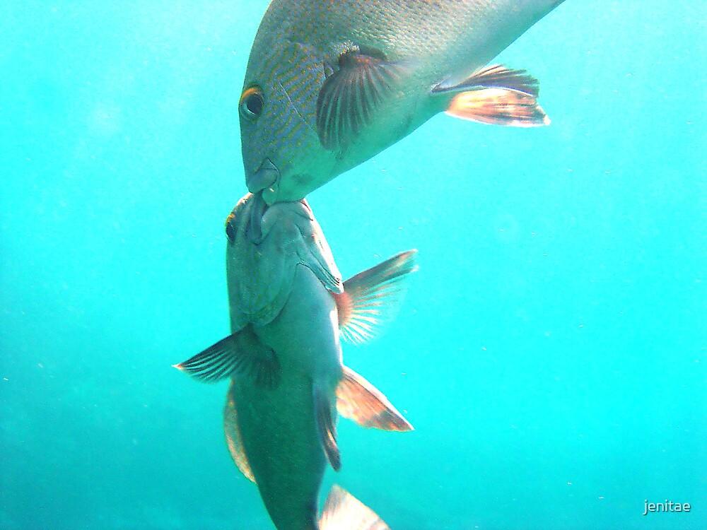 fish kissing by jenitae