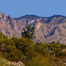 Santa Catalina Mtns. by Marvin Collins